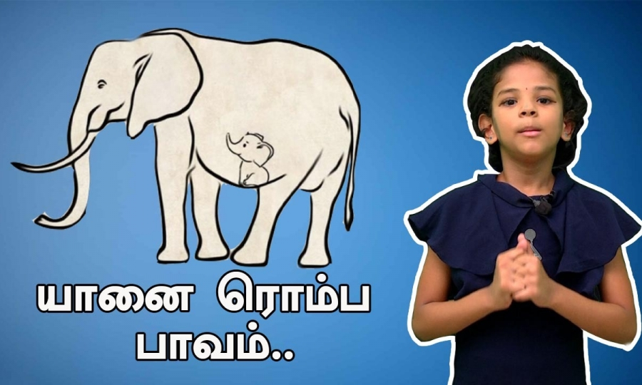 யானை ரொம்ப பாவம்| KERALA ELEPHANT DEATH INCIDENT| ONE INDIA TAMIL
