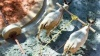 பழங்கால கட்டிடங்கள் புனரமைக்கும் பணி... 2 காளைகளை வாங்கிய பொதுப்பணித்துறை