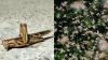 இதுவரை கண்டதில்லை.. நீலகிரியில் குவியும் புதிய வகை வெட்டுக்கிளிகள்.. அதுவா இது? பீதியில் விவசாயிகள்