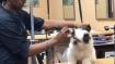 Video: தோ தோ நாய்க்குட்டி.. அடடா..  நாய் குட்டியை என்னெல்லாம் பண்றாங்கப்பா!