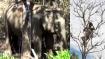 8 நாளாச்சு.. இந்த தாயின் கண்ணீர் எப்போது தீரும்.. குட்டியின் சடலத்தை விட்டு நகராமல் நிற்கும் யானை!