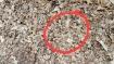 15 விநாடிக்குள்ள இந்த படத்துல இருக்கற பாம்பை கண்டுபிடிச்சா.. நீங்க உண்மையிலேயே கெத்துதான்!