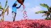உரிக்காமலேயே கண்ணீர் வரவைக்கும் சின்ன வெங்காயம்... விலை 1 கிலோ 100 ரூபாய்