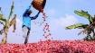 வெங்காயத்தை பதுக்கி கொள்ளை லாபம் சம்பாதிக்க நினைத்தால் கடும் நடவடிக்கை - மத்திய அரசு