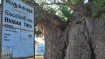 200 ஆண்டுகள் பழமையான மரம்.. வரலாற்று குறிப்பேடு கல்வெட்டை திறந்த முதல்வர்.. அப்படி என்ன ஸ்பெஷல்?