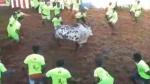 அலங்காநல்லூர் ஜல்லிக்கட்டு: மாடு முட்டி உரிமையாளர் உயிரிழப்பு; பார்வையாளர் மயங்கி விழுந்து மரணம்