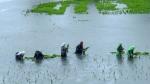 இன்று முதல் கேரளாவில் அதிக மழைக்கு வாய்ப்பு.. மேட்டூர் அணைக்கு நல்ல வேட்டை.. வெதர்மேன்