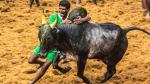 மதுரை பாலமேட்டில் இன்று காலை 8 மணிக்கு ஜல்லிக்கட்டு- சீறி பாய காத்திருக்கும் 783 காளைகள்