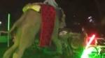 திருமண விழாவில் ரகளையில் ஈடுபட்ட யானை.. மணப்பந்தலை பந்தாடியது.. தெறித்து ஓடிய மணமகன்.. வைரல் வீடியோ