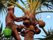 மதுபான பார்கள் மூடப்படுவதால் 'கள்'ளுக்குத் தாவும் கேரளத்தினர்: விவசாயிகளுக்கு கொண்டாட்டம்