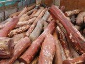 தமிழகத்திற்கு செம்மரக் கட்டைகளைக் கடத்த முயன்றதாக ஆந்திராவில் 16 பேர் கைது
