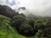 காடுகளை காப்போம் #internationaldayofforests
