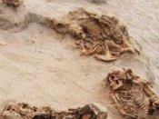 140 குழந்தைகள், 200 ஒட்டகங்கள்... 550 ஆண்டுகளுக்கு முன் நடந்த மாபெரும் நரபலி கண்டுபிடிப்பு