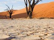 நமிபியாவில் கடும் பஞ்சம்: திண்டாடும் மக்கள்.. மடியும் கால்நடைகள்.. எமர்ஜென்சியை அமல்படுத்திய அதிபர்