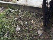 அஸ்ஸாமில் நீடிக்கும் விமான மர்மங்களைப் போல 'பறவைகளின் தற்கொலை பிரதேசமும்/' புரியாத புதிர்தான்!
