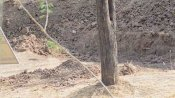 முடிஞ்சா இந்த படத்துல சிறுத்தை எங்க இருக்குனு கண்டுபிடிங்க பார்க்கலாம்.. டக்குனு சொன்னா பிஸ்தா தான்