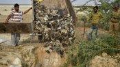 ராஜஸ்தான், குஜராத்தில் பல்லாயிரக்கணக்கில் கொத்து கொத்தாக செத்து விழும் வெளிநாட்டு பறவைகள்!