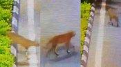 ஆமா.. செங்கல்பட்டு ரோட்டில் நைட் ஒன்னு போச்சே.. அது என்ன.. காட்டு