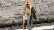 அடடா காட்டில் வசிக்கும் இந்த குரங்குக்கு இருக்கும் அக்கறை கூட நமக்கு இல்லையே!- வைரல் வீடியோ