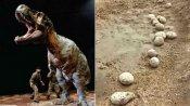 ஜூராசிக் பார்க் - பெரம்பலூரில் 14 கோடி ஆண்டுகளுக்கு முந்தைய டயனோசர் முட்டைகள் கண்டெடுப்பு