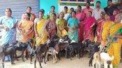 ஆட்டு சந்தைக்கு மாற்றாக  ஆடு வங்கி  (Goat Bank)  அக்ரோடெக் அசத்தல்!