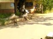 கோவை கலெக்டர் ஆபிஸில் வானரக் கூட்டம்... சுத்தி பாக்க வந்துச்சோ!