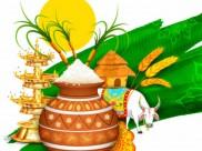 தை பொங்கல் 2019: சூரியனுக்கு நன்றி சொல்லும் திருநாள் - பொங்கல் வைக்க நல்ல நேரம்