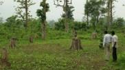 வளர்ச்சி திட்டத்துக்காக.. 5 ஆண்டுகளில் இந்தியாவில் 1 கோடி மரங்கள் வெட்டி அழிப்பு.. மத்திய அரசு தகவல்