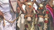 ஆஹா கல்யாணம்... மைக் செட் வைத்து.. மேளதாளம் முழங்க... பஞ்ச கல்யாணிகளுக்கு கல்யாணம்