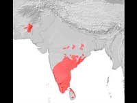 Initial settlement of Indians took place in south India: study