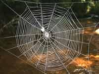 மாமா போட்ட பந்தல்; மறுபடி பிரிச்சா கந்தல். …(விடுகதை) 20-spider-web-200