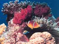 Coral Reefs in Guld of Mannar