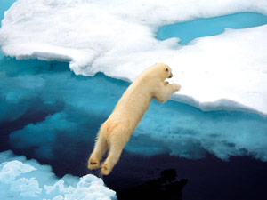 Arctic Sea Could Be Ice Free 2015 Aid0174