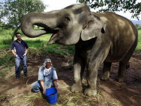 coffee from an elephants gut fills