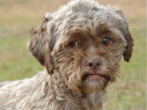 Dog with human face ready for adoption