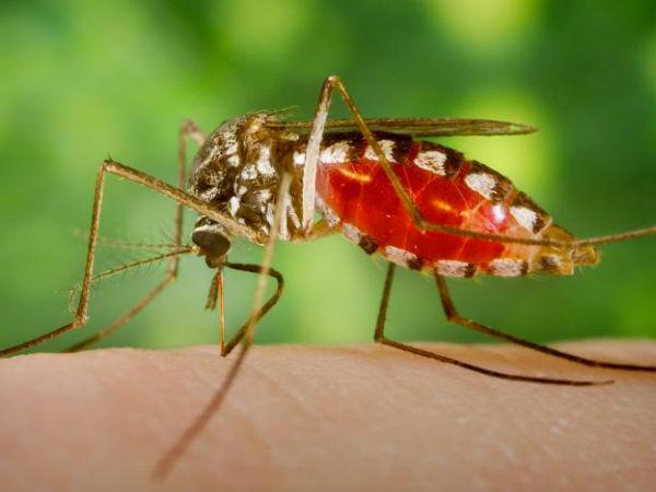 Mosquitoes Everywhere North Chennai