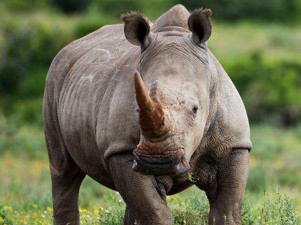 Rhino Poacher sentenced to 77 years