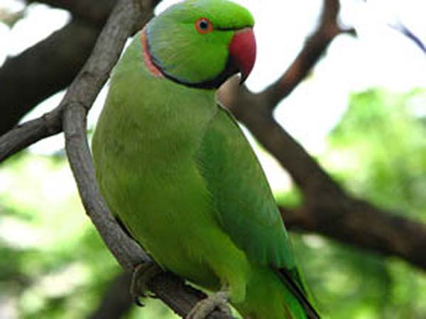 Astrology Parrot confiscated in a five star hotel…