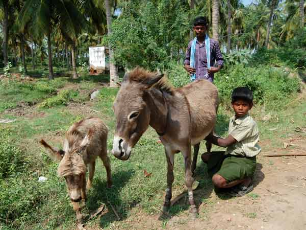 Donkey milk on hot sale in Karur