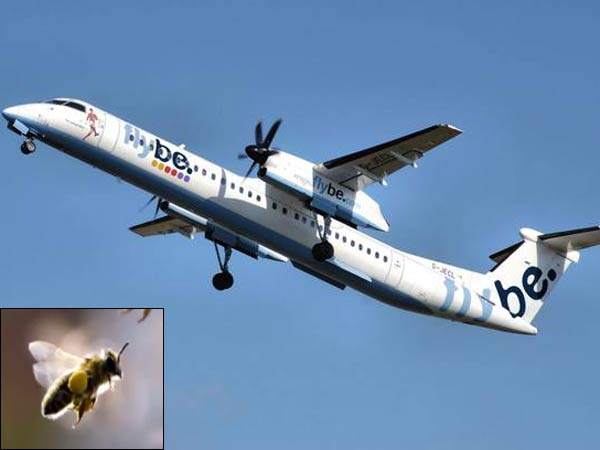 Bee causes plane to make emergency landing