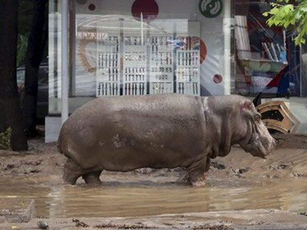 Floods Free Zoo Beasts in Streets of Georgia