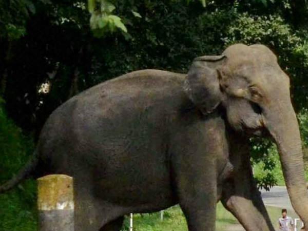 மேற்கு வங்கத்தில் ரயில் மோதி குட்டி உட்பட 3 யானைகள் பலி!