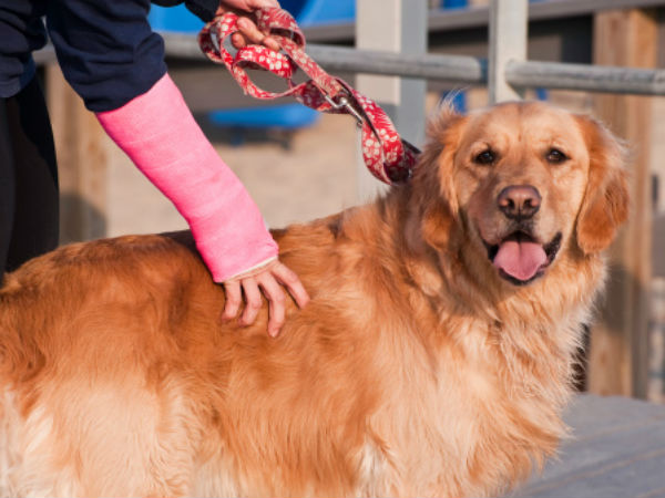 Dog's pee triggers clash leaving master injured