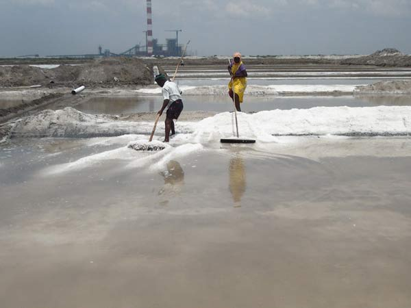 Salt production increases in Tuticorin