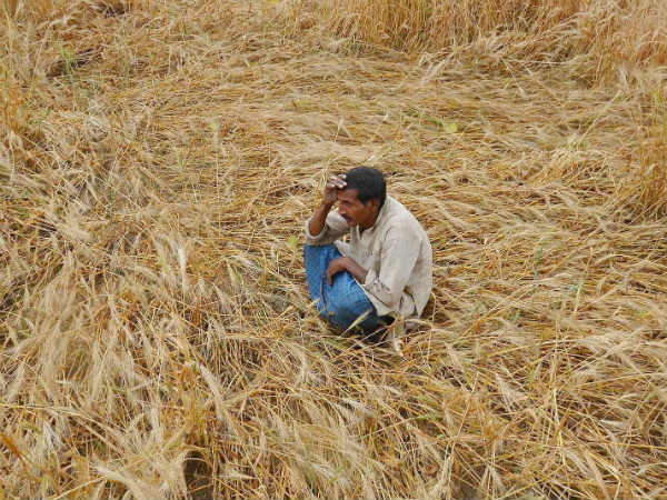 Cauvery water shortage:14 farmers died in delta region