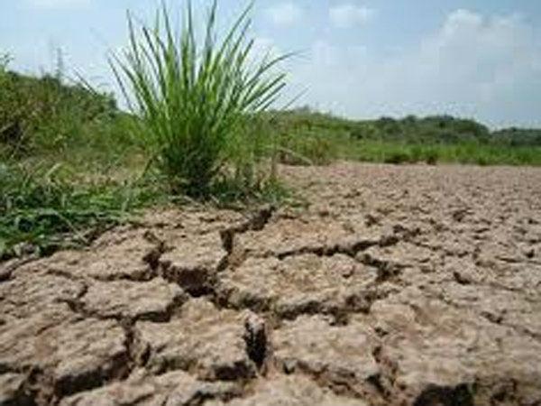 PIL seeks State drought declaration