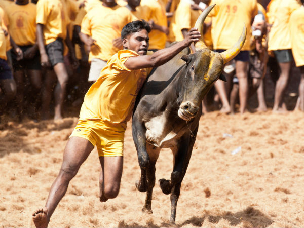23 arrested for conduting Jallikkattu in Nagoor