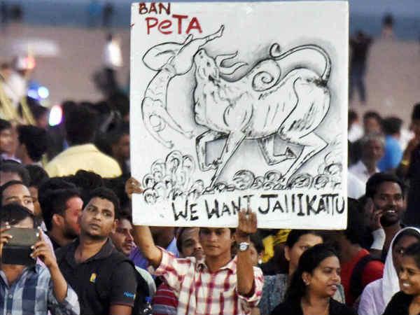 அமைதி போராட்டம் நடத்தும் மெரினா போராட்டக் குழுவினர் மீது நடவடிக்கை இல்லை- சென்னை போலீஸ்