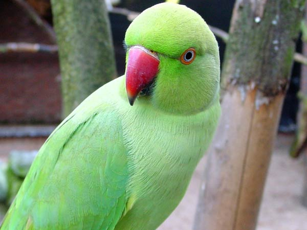 Woman announces Rs 25,000 reward for missing parrot