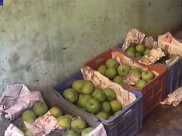 10 tonnes of artificially ripened mangoes seized in chennai